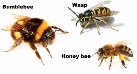 Hives (Urticaria)   AAFA.org